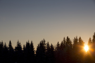 The sundown. The sun is going down behind the thick forest. The forest is a silhouette and some flare is added in the image.