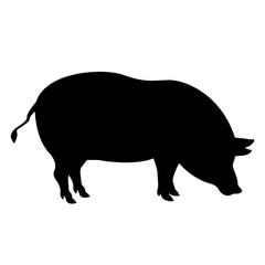 pig vector illustration realistic silhouette black