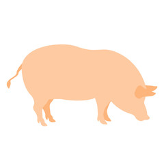 pig vector illustration realistic style Flat