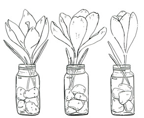 hand drawn set of graphic flowers Crocus on white background