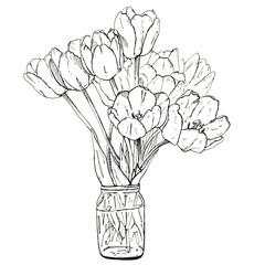 hand drawn graphic flower tulips on white background
