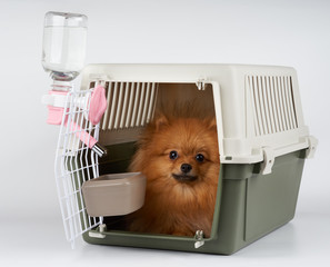 Pet carrier with dog inside
