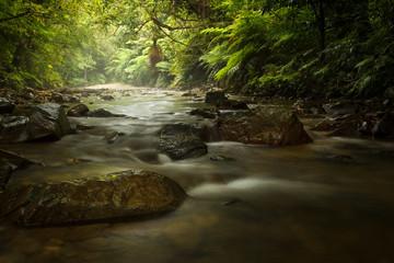 Stone Pathway in Stream