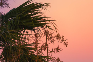 Palm leaves silhouettes over bright evening sky