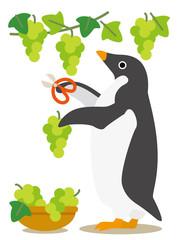 アデリーペンギン ぶどう狩り