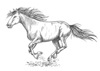 Rush running horse sketch portrait