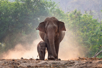 Foto op Plexiglas Olifant Mother and baby elephant walk together