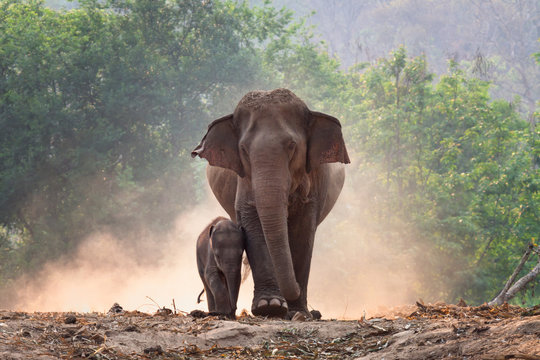 Mother and baby elephant walk together