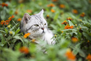 The cat lying on the grass