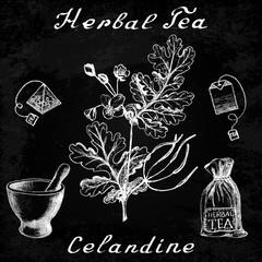 Greater celandine hand drawn sketch botanical illustration on chalk board