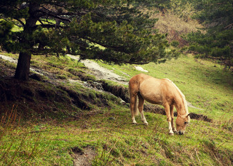 Horse in Caucasus mountains.