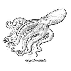 Isolated image octopus on white background.