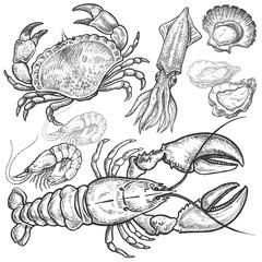 ÊSet hand drawings of seafood.