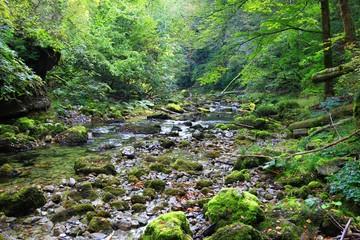 Wild nature in Croatia
