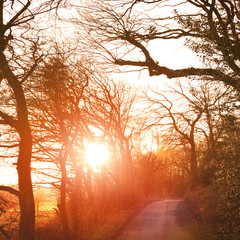 Winter scene with bare trees, orange sunbeam and lonly footpath or country road.