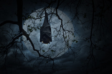 Bat sleep and hang on dead tree over moon and cloudy sky, Spooky