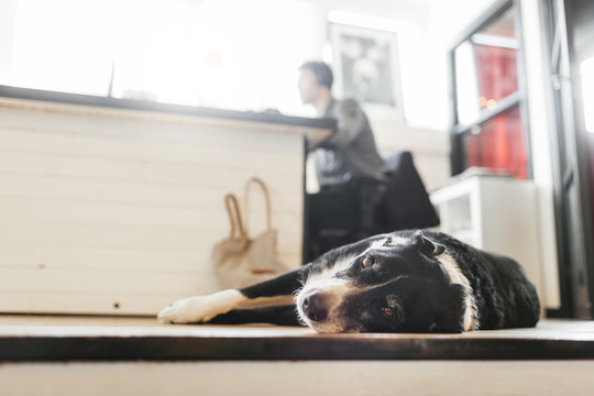 Portrait of dog relaxing while man working in background