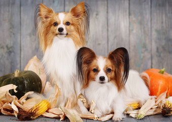 two adult dogs