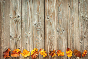 autumn decoration arranged with dry leave
