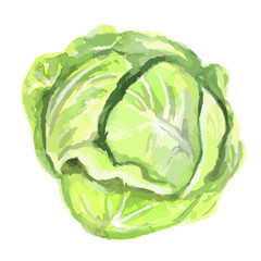 Watercolor isolated cabbage on white background. Fresh and healthy fruit with vitamins. Natural vegan food.