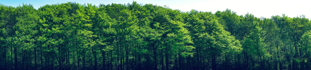 Papiers peints Forets Green trees scenery in panorama