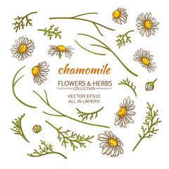 chamomile elements vector set
