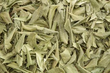 Neem leaves medicinal plant