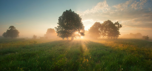 Bright sunrise on spring meadow