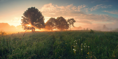 Foto op Canvas Ochtendgloren Colorful spring sunrise on meadow