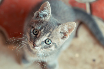 Little cute cat looking up to camera