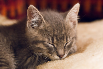 Sleeping little cute cat