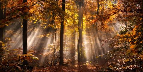 Magische Lichtstimmung in einem nebligen Wald im Herbst