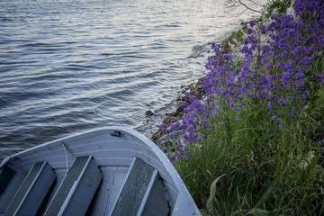 small boat pulled on shore, framed by purple flowers