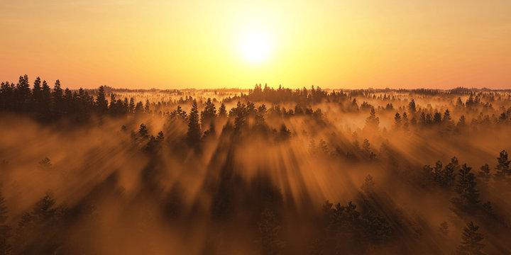 Sonne und Nebel