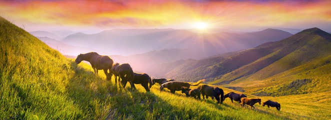 Wall Mural - Horses on the mountain top