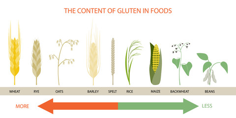 Infographics on the levels of gluten in foods.