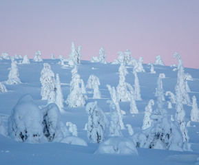 Snow covered trees, Lapland, Finland, Europe