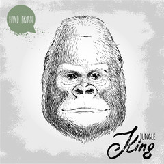Hand drawn sketch style illustration of monkey face. Jungle King. Chinese zodiac sign. Gorilla male face. Dangerous and biggest monkey of the world. Vector illustration.