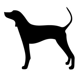 dog on a white background
