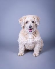 Dog on background. taken in a studio.