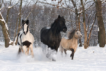 Three horses runnig