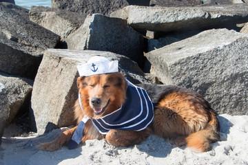 Hund als Matrose liegt vor großen Steinen am Strand im Sand