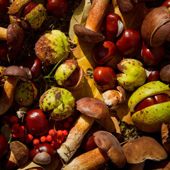 conkers mushrooms rowen foraging  -  autumn harvest