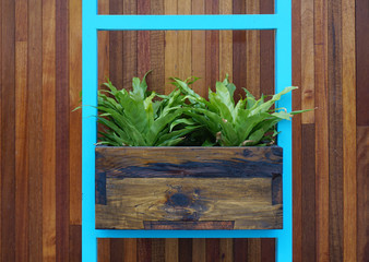 Fern plants in old timber box with timber plank panel background