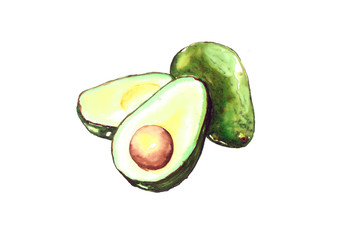 Avocado, Watercolor painting isolated on white background