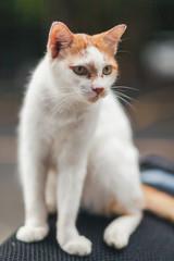 Beautiful cute cat