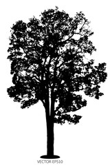 Vector of tree, silhouette tree on white background.