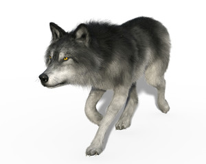 3d render of a grey wolf trotting isolated on white background