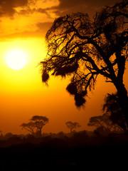 Typical african sunset with acacia trees in Masai Mara, Kenya. V