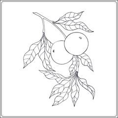 Vintage decorative apple tree. Outline drawing/ Vector illustration